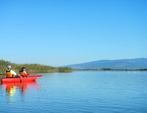 Kayak and flamingos